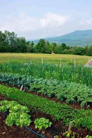 Good Heart Farm