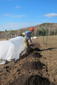 Edge raking out compost onto a newly broad-forked bed