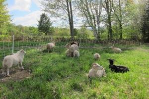 Back on Pasture