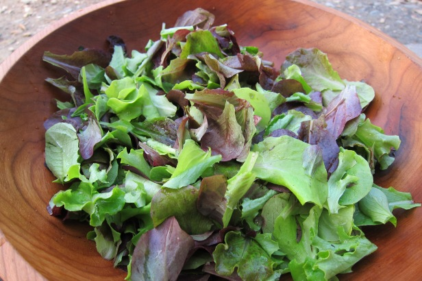 First Lettuce Harvest