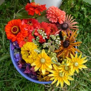 farm fresh flowers